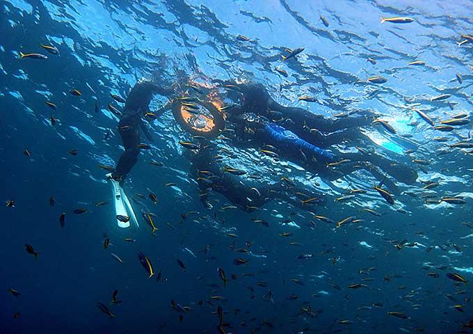 泳ぐ下には魚がいっぱいの八丈島でのスノーケリング