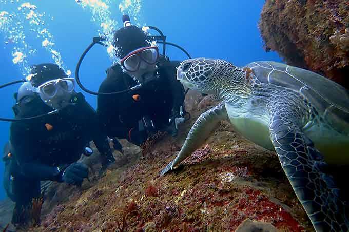 八丈島の体験ダイビングで間近にウミガメ!!