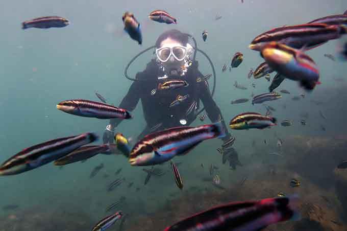 色とりどりの魚を見ながらの八丈島での体験ダイビング