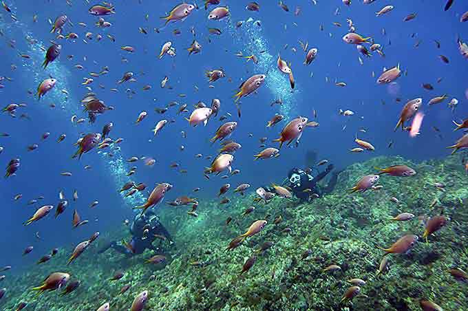 魚いっぱい!!八丈島で体験ダイビング