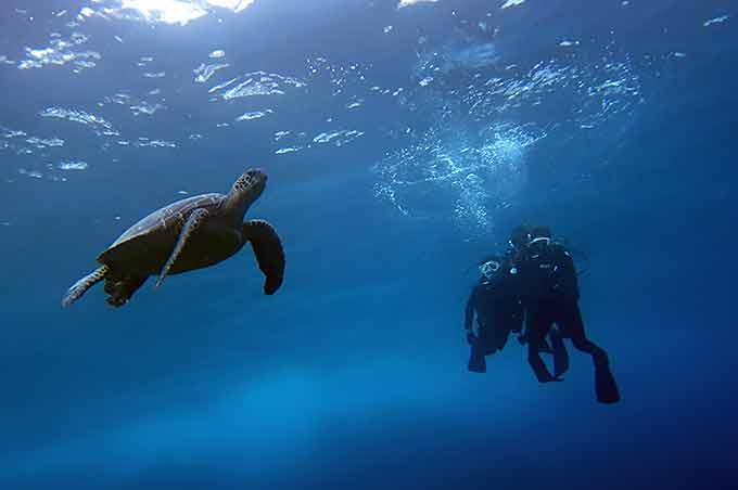 ウミガメもゆっくり見られる八丈島での体験ダイビング